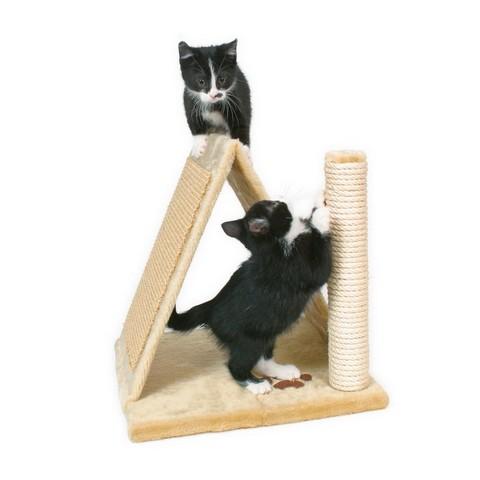 Котятам необходимо точить когти