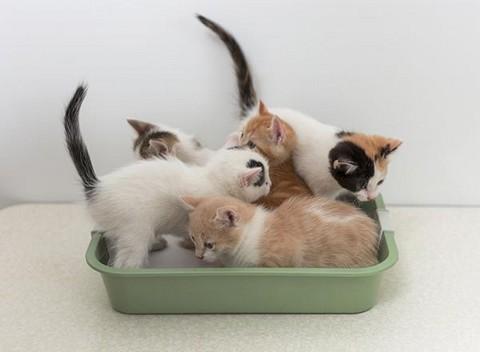 Лоток для котят