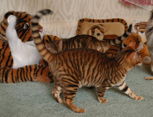 "Маленькие ""тигры"""