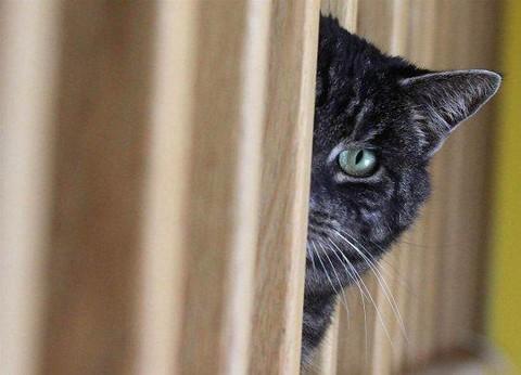 Коты опасаются многих вещей