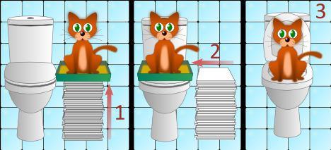 Порядок приучения кошки к туалету