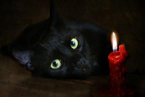 Приметы про кошек – самые распространенные суеверия