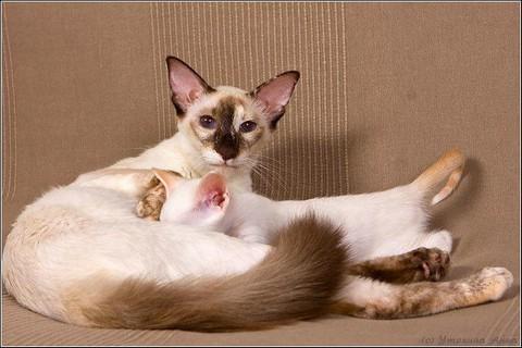 Прирожденная мама