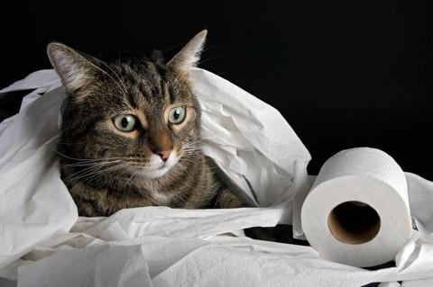 Туалет для кошек какой лучше выбрать Обзор советы и рекомендации