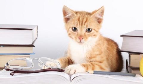 Как отучить котенка...