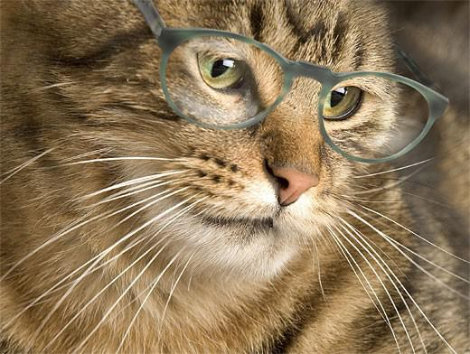 Сколько лет кошке по меркам жизни человека?