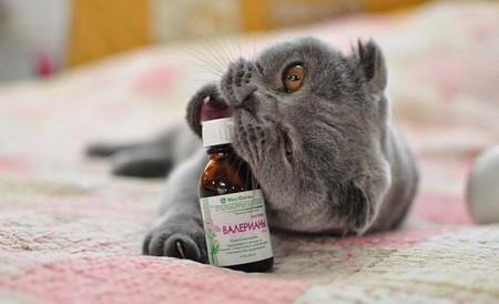 Bалерьянка и кошка