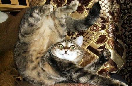 Кот под воздействием корня валерианы