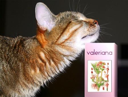 Почему коты реагируют на валерьянку?