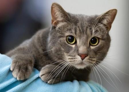 Пронзительный кошачий взгляд