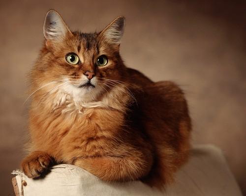 Авитаминоз у кошек - то это за болезнь и как его лечить