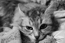 Кошачья апатия