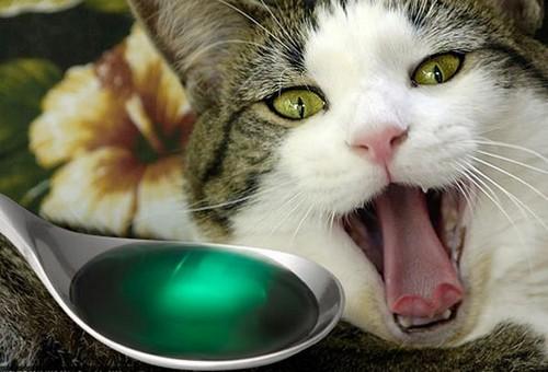 Лекарство от запора для кота