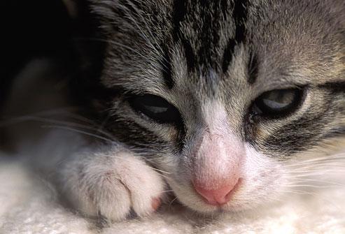 Котик страдает от боли