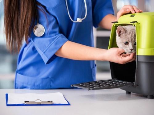 Кошка у врача