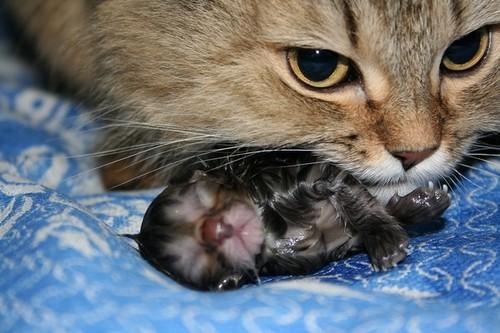 Котенок родился!
