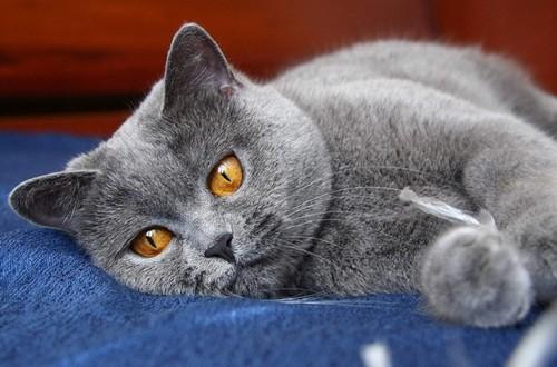 Что делать, если у кошки идет кровь из матки?
