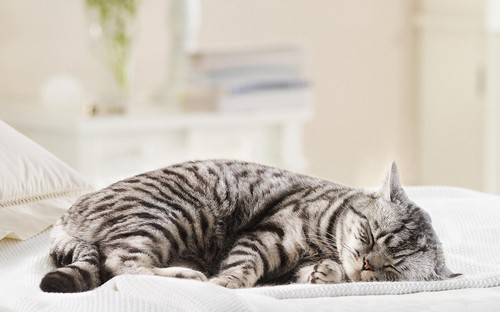 Сонливость - признак беременности