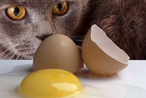 Кот и яйцо