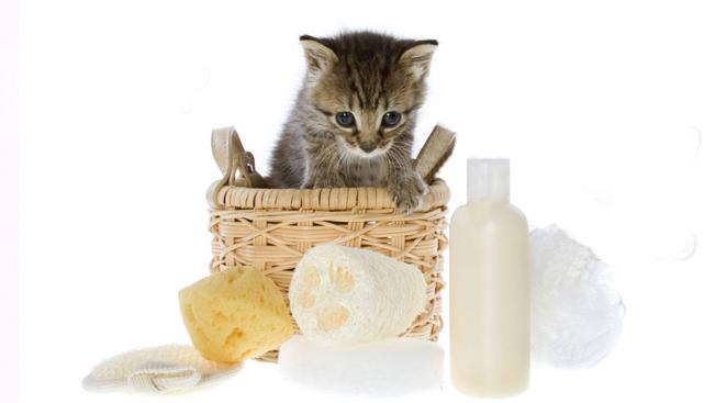 Как выбрать средство для мытья для кошки?
