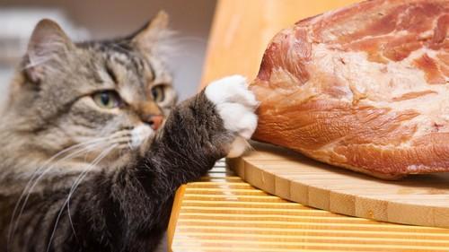 Важно кормить кошку правильно!