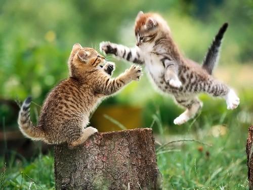 Котята ревзятся