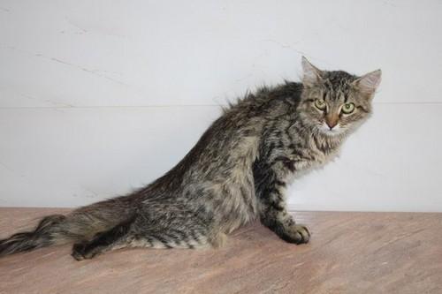 Паралич у кошки