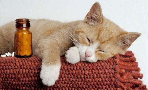 Таблетки для лечения животных