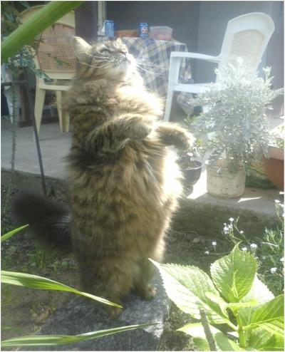 кошка бантик