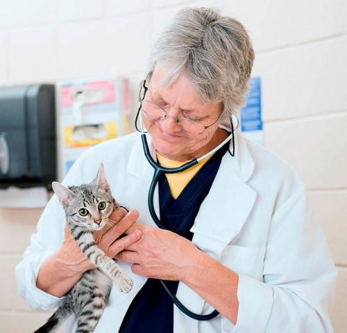 Котик у врача