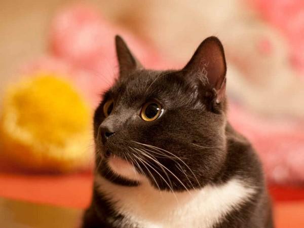 Акне у кошки на подбородке как лечить