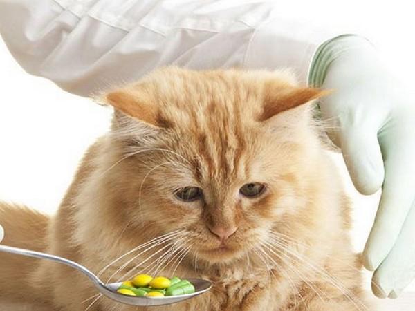 Аскариды у кошек лечение в домашних условиях thumbnail