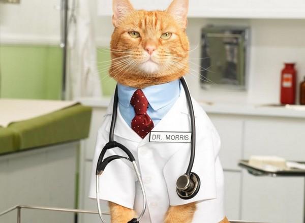 Как кошки лечат людей » Страшные истории