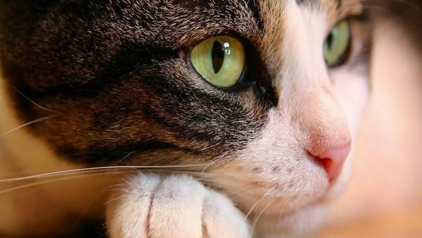 Кошки - загадочные существа