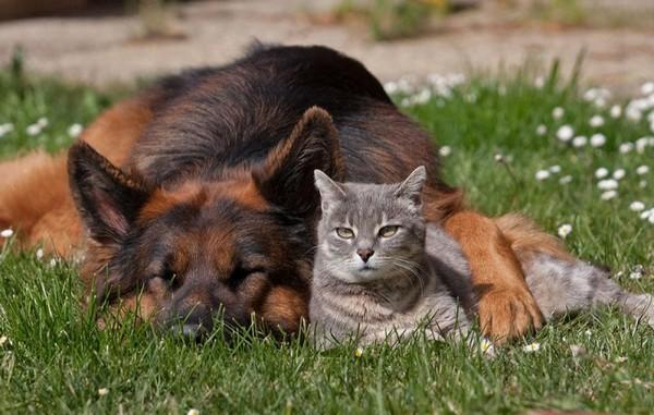 """Ну прямо """"как кошка с собакой""""!"""