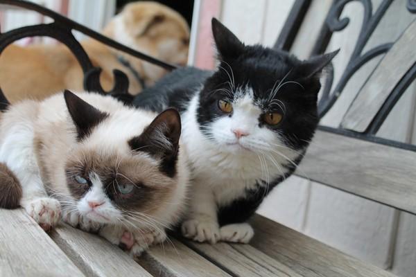 Грампи кэт и ее брат