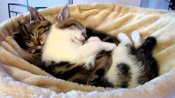 Котята - сплошное умиление