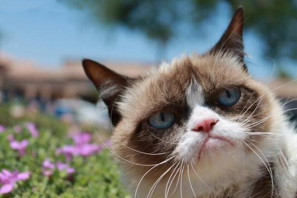 Хозяева кошки пропагандируют приобретение беспризорных животных в приютах