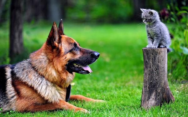 Котенок и собака