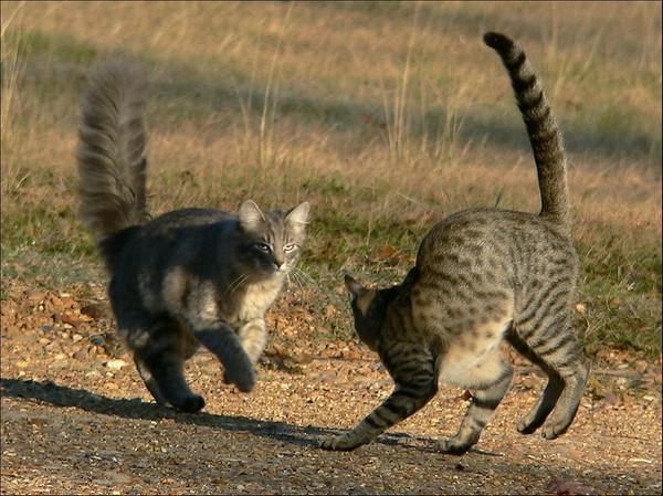 Сердитые коты