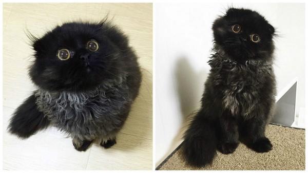 Котик Гимо - звезда Instagram