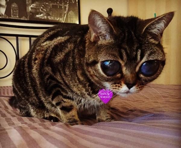 Самые большие глаза в кота