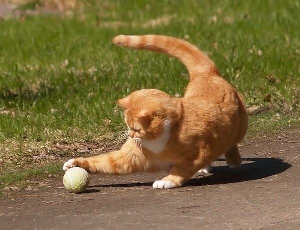 Игра - важная часть воспитания кошек