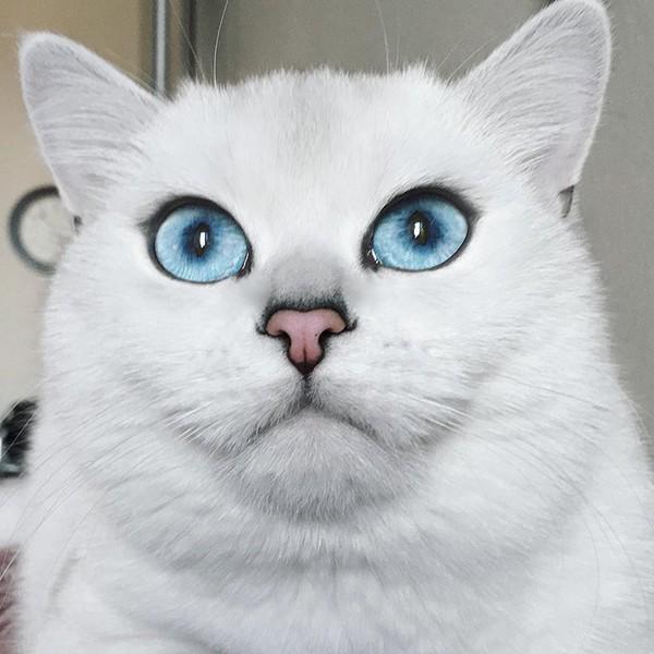 Удивительные глаза Коби сделали ее очень популярной в Интернете