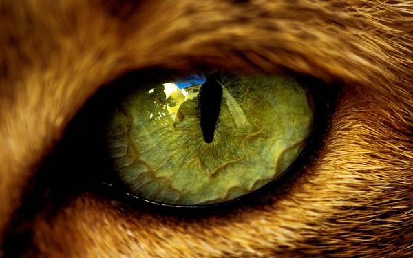 Глаз здорового питомца