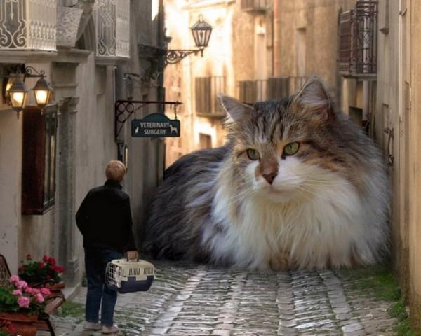 Какие породы кошек самые крупные?