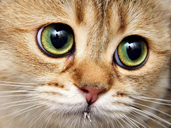 Глаза здорового питомца