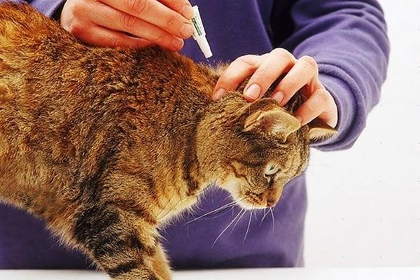 Обработка кошки об паразитов