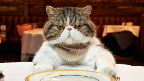 Рейтинг кормов для кошек супер премиум класса. Обзор Топ 15 лучших кормов на 2019 год