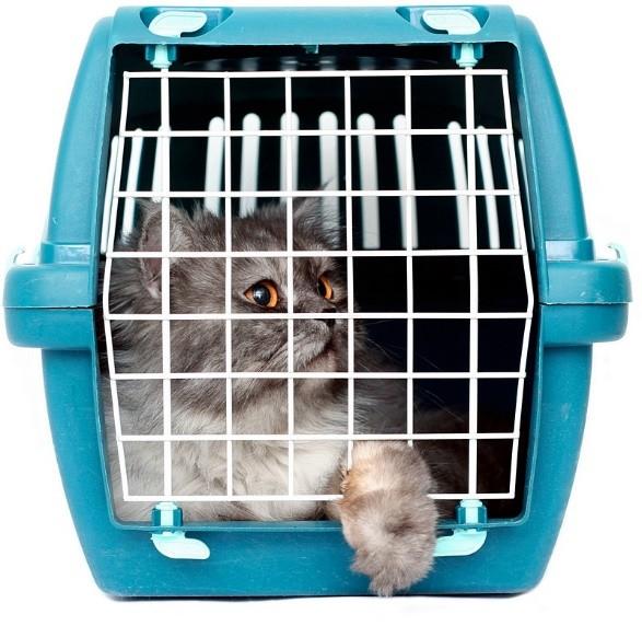 """Кошка в переносном """"домике"""""""